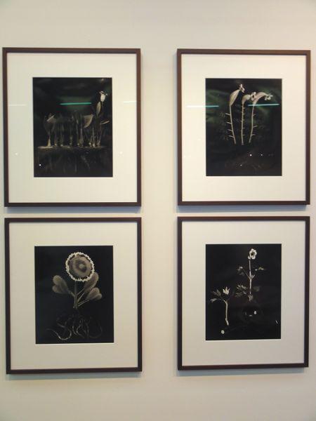 Ulrik Heltoft art Armory Show NY 2014